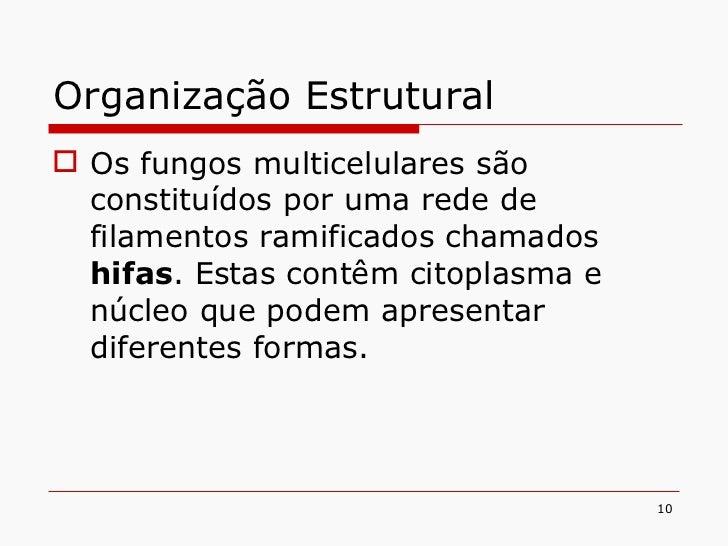 Organização Estrutural <ul><li>Os fungos multicelulares são constituídos por uma rede de filamentos ramificados chamados  ...