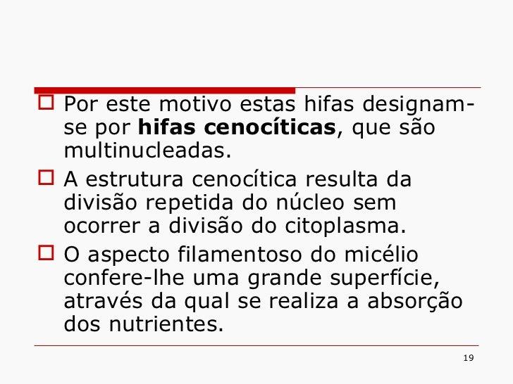 <ul><li>Por este motivo estas hifas designam-se por  hifas cenocíticas , que são multinucleadas. </li></ul><ul><li>A estru...