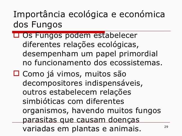 Importância ecológica e económica dos Fungos <ul><li>Os Fungos podem estabelecer diferentes relações ecológicas, desempenh...