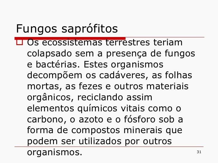 Fungos saprófitos <ul><li>Os ecossistemas terrestres teriam colapsado sem a presença de fungos e bactérias. Estes organism...
