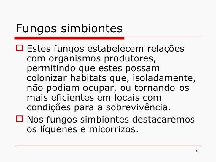 Fungos simbiontes <ul><li>Estes fungos estabelecem relações com organismos produtores, permitindo que estes possam coloniz...