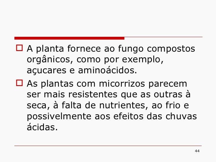 <ul><li>A planta fornece ao fungo compostos orgânicos, como por exemplo, açucares e aminoácidos. </li></ul><ul><li>As plan...