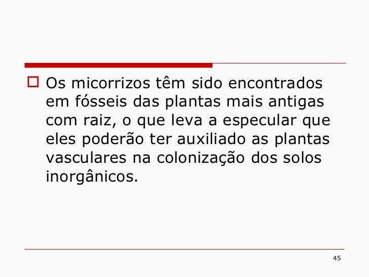 <ul><li>Os micorrizos têm sido encontrados em fósseis das plantas mais antigas com raiz, o que leva a especular que eles p...