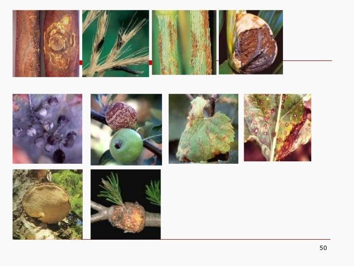5   fungi