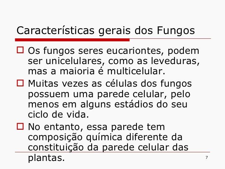 Características gerais dos Fungos <ul><li>Os fungos seres eucariontes, podem ser unicelulares, como as leveduras, mas a ma...