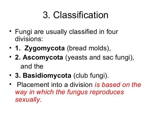 Cara reproduksi zygomycota asexual reproduction