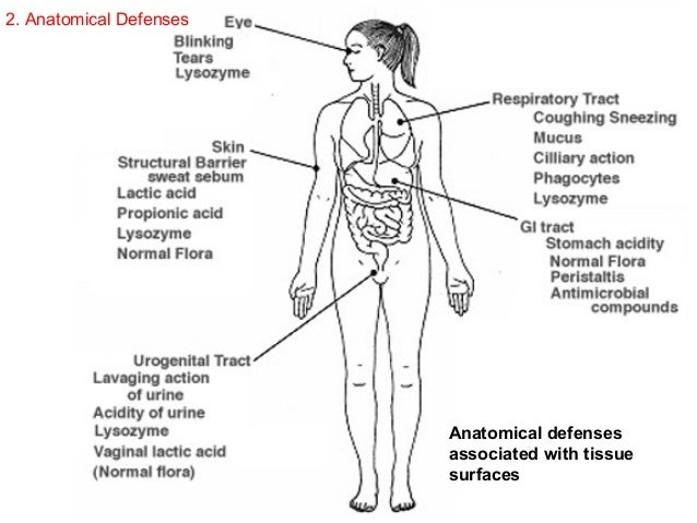 the bodies defence against microbes and pathogens Immune defense against microbial pathogens  in host defense against pathogenic microbes is summarized below  multiplies outside cells but attachment to body .