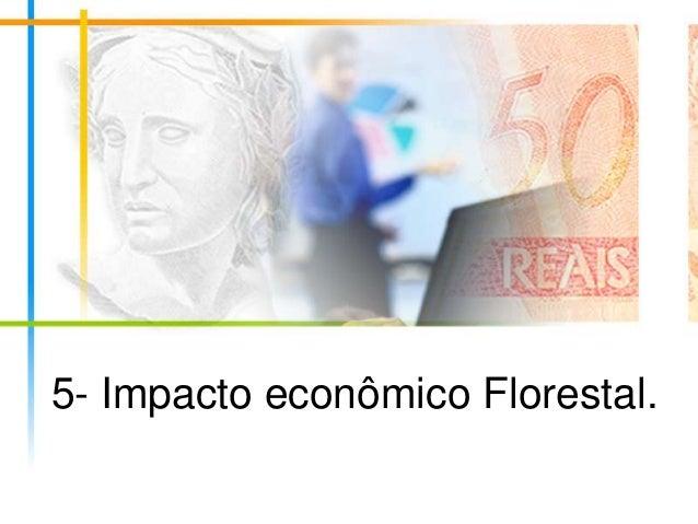 5- Impacto econômico Florestal.