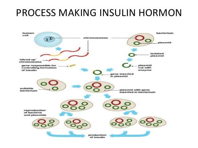 5 insuline hormone