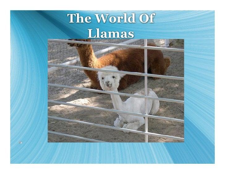 The World Of   Llamas