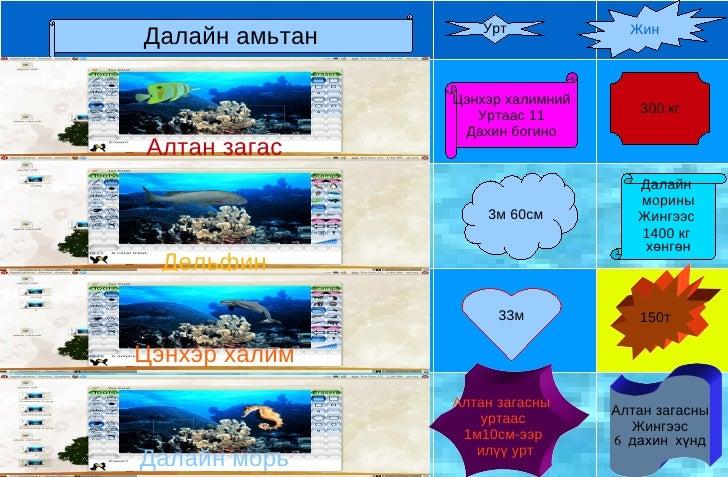 Урт             ЖинДалайн амьтан                Цэнхэр халимний                                     300 кг                ...