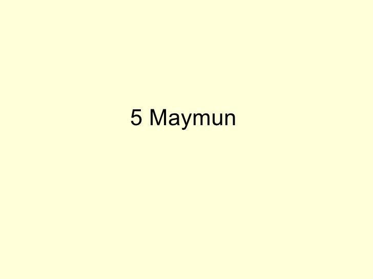 5 Maymun