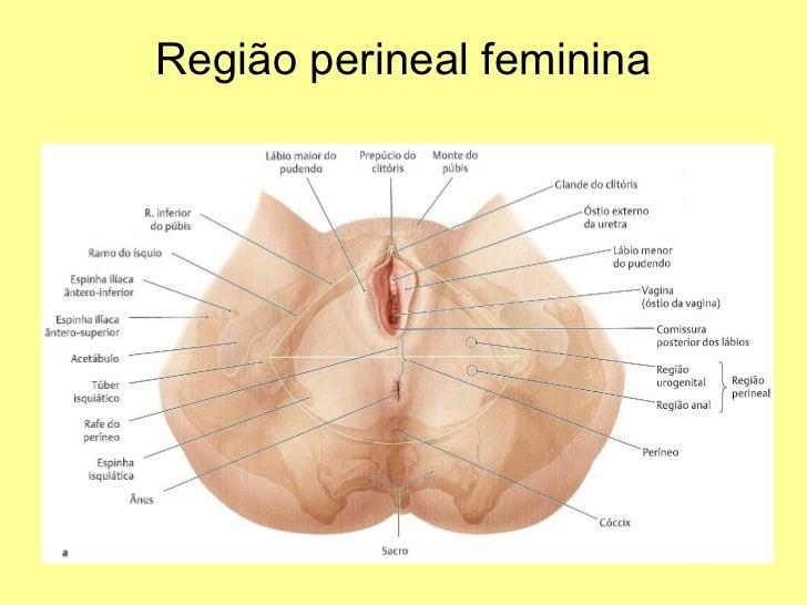 Vistoso Anatomía Región Perianal Elaboración - Anatomía de Las ...