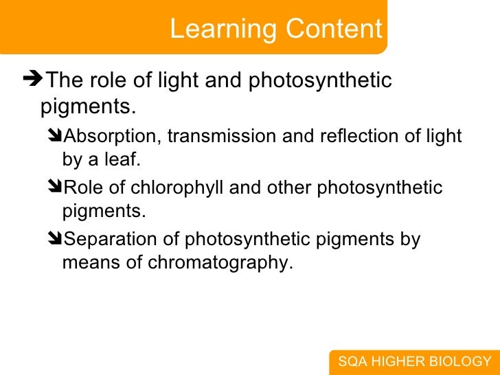 In light photosynthesis role how to write a research paper for elementary