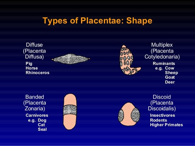 placentation in mammals