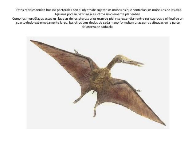 Dinosaurios Voladores Y Marinos También se le conoce como megalodonte. dinosaurios voladores y marinos