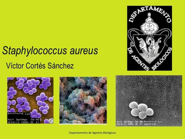 Staphylococcus aureusVíctor Cortés Sánchez                   Departamento de Agentes Biológicos