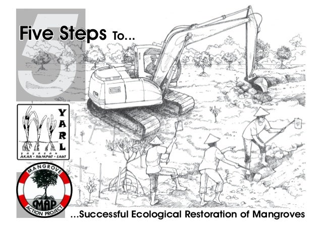 ...Successful Ecological Restoration of Mangroves 5Five Steps To...