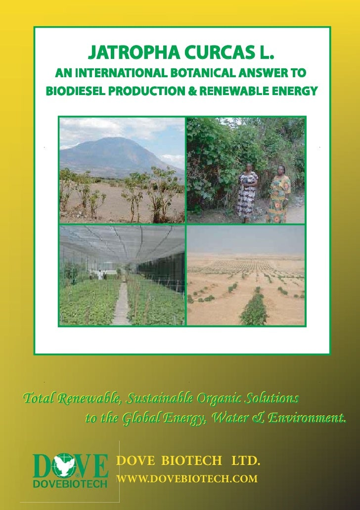 JATROPHA CURCAS L.    AN INTERNATIONAL BOTANICAL ANSWER TO   BIODIESEL PRODUCTION & RENEWABLE ENERGYTotal Renewable, Susta...