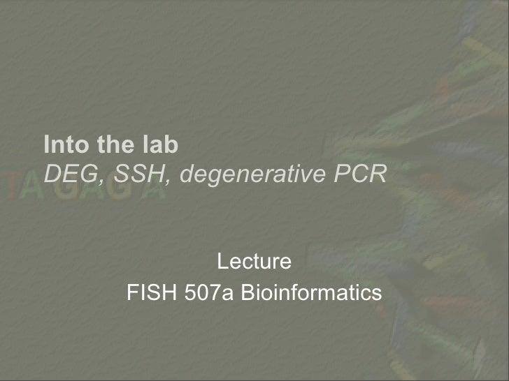 Into the lab DEG, SSH, degenerative PCR                 Lecture       FISH 507a Bioinformatics