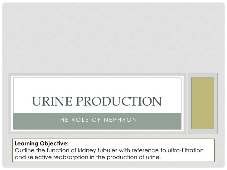 Urine Production