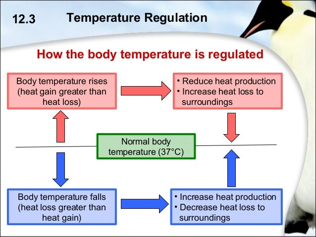 homeostasis regulation Describes temperature regulation in the human body how the body adapts to cold or hot environments .