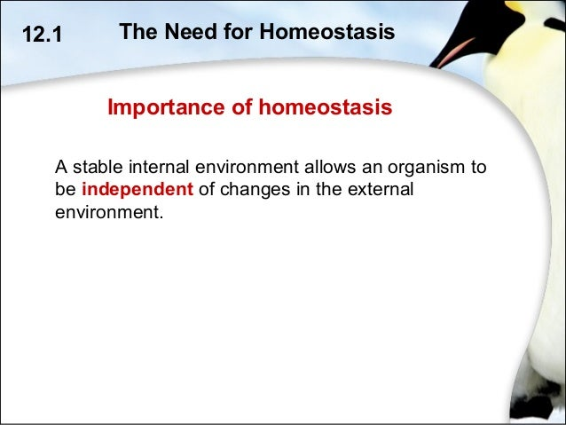 the importance of homeostasis in maintaining Homeostasis and feedback loops homeostasis relates to dynamic physiological processes that help us maintain an  maintaining internal conditions in the body is.