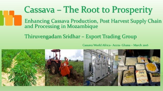Cassava – The Root to Prosperity Thiruvengadam Sridhar – Export Trading Group Enhancing Cassava Production, Post Harvest S...
