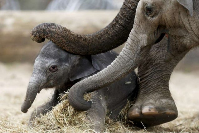 50 Astonishing Animal Photos of 2015 Slide 2