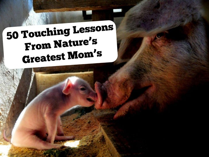 50 Touching Lessons From Nature's Greatest Moms