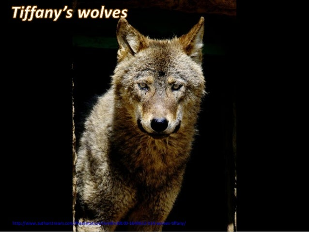 http://www.authorstream.com/Presentation/mireille30100-1643612-514-wolves-tiffany/