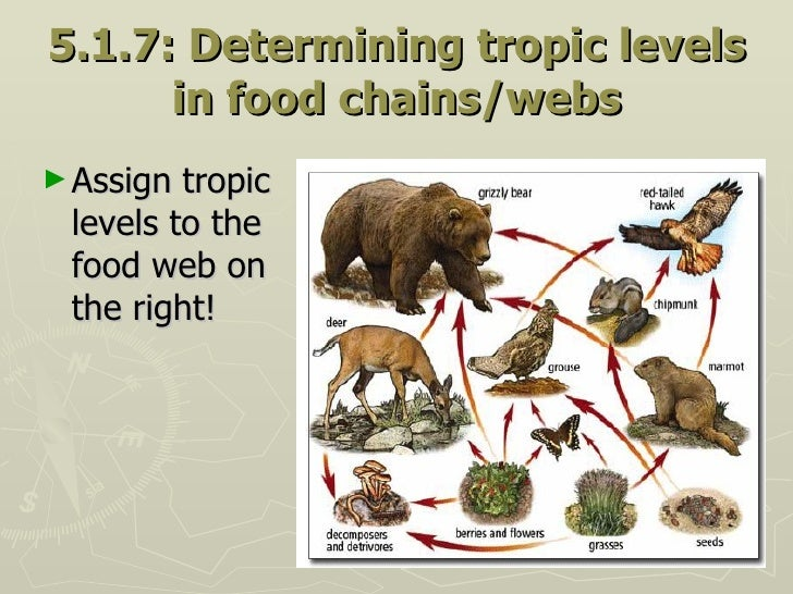 5.1.7: Determining tropic levels in food chains/webs <ul><li>Assign tropic levels to the food web on the right! </li></ul>