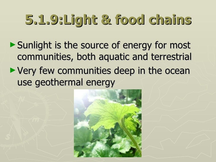 5.1.9:Light & food chains <ul><li>Sunlight is the source of energy for most communities, both aquatic and terrestrial </li...