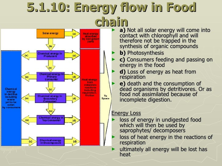 5.1.10: Energy flow in Food chain <ul><li>a)  Not all solar energy will come into contact with chlorophyll and will theref...