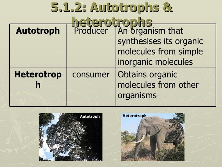 5.1.2: Autotrophs & heterotrophs Obtains organic molecules from other organisms consumer Heterotroph An organism that synt...