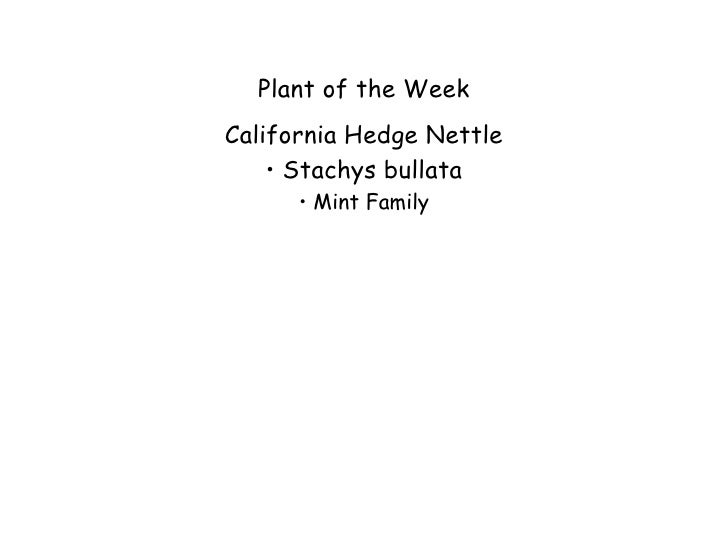 Plant of the WeekCalifornia Hedge Nettle    •Stachys bullata      • Mint Family