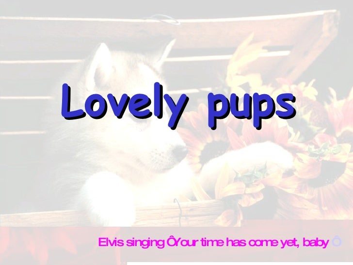 Lovely pups Elvis singing ' Your time has come yet, baby  '