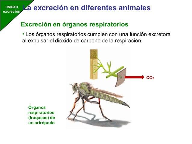 Excreción de animales