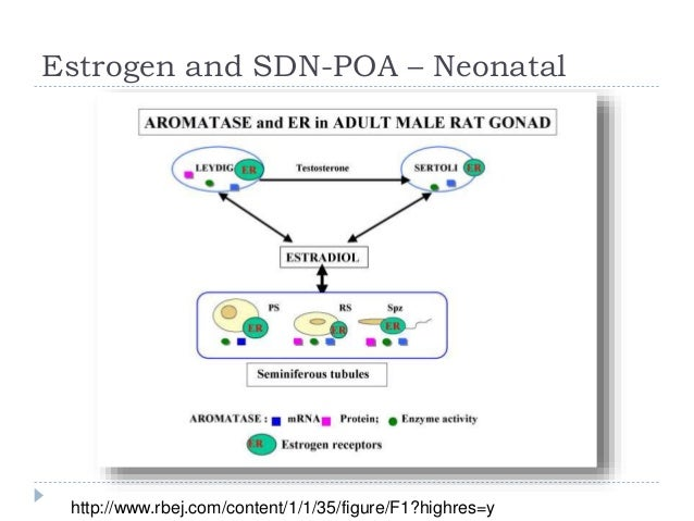 Define sexually dimorphic nucleus