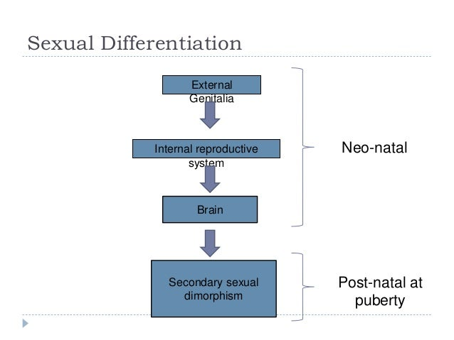 Sexual dimorphism refers to quizlet