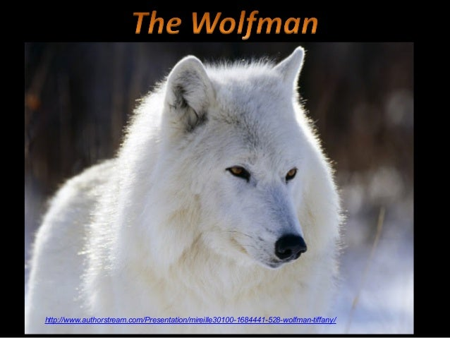 http://www.authorstream.com/Presentation/mireille30100-1684441-528-wolfman-tiffany/