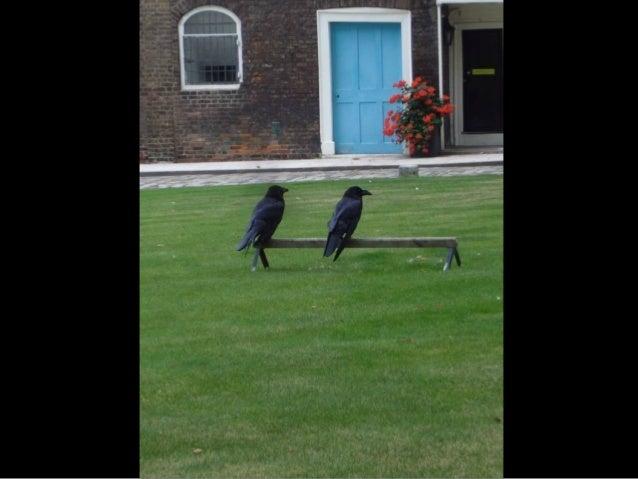 536 - Ravens-Tower of London