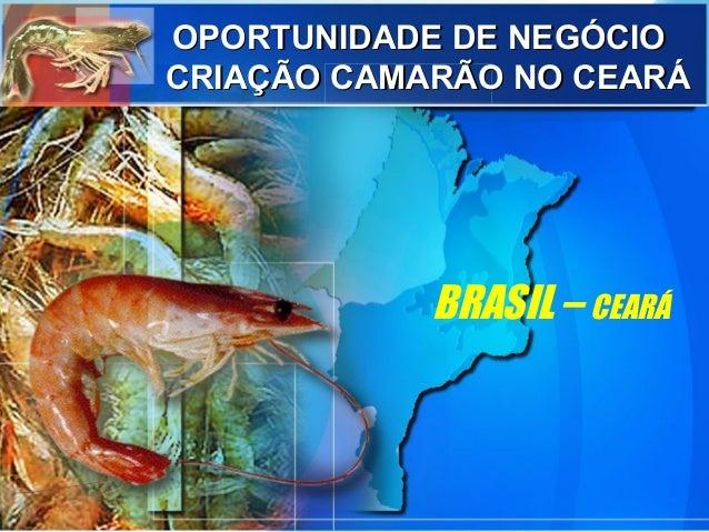 BRASIL – CEARÁ OPORTUNIDADE DE NEGÓCIOOPORTUNIDADE DE NEGÓCIO CRIAÇÃO CAMARÃO NO CEARÁCRIAÇÃO CAMARÃO NO CEARÁ