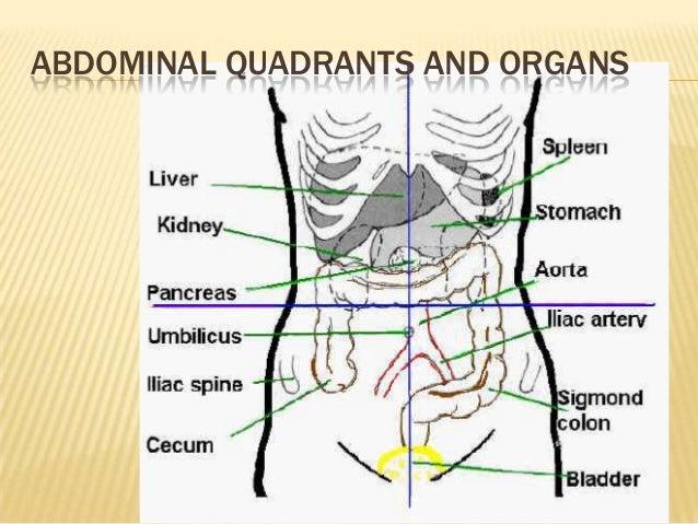 The 4 Abdominal Quadrants: Regions & Organs - Video ...   Abdominal Quadrants And Organs Diagram