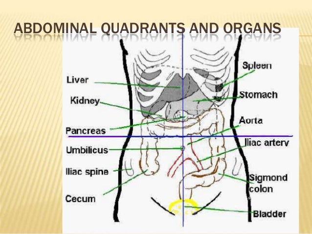 53 a focus 9 elimination abdominal quadrants and organs 21 ccuart Image collections