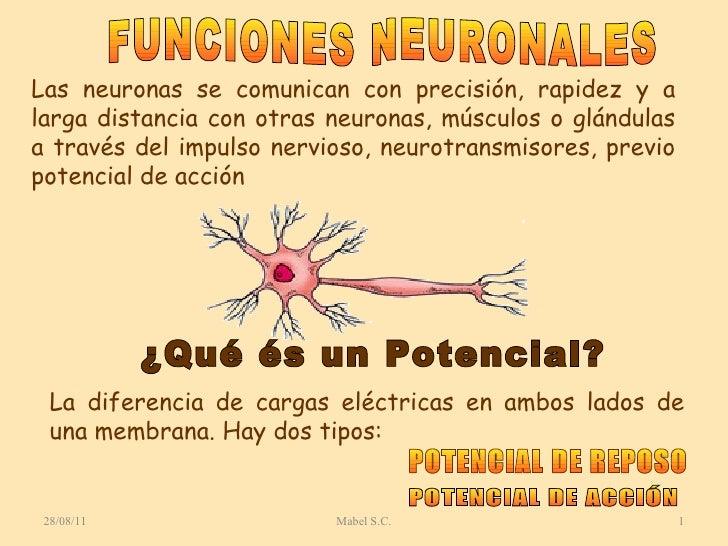 28/08/11 Mabel S.C. Las neuronas se comunican con precisión, rapidez y a larga distancia con otras neuronas, músculos o gl...