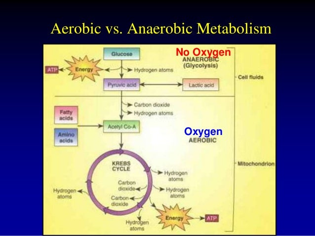 Difference Between Aerobic and Anaerobic Metabolism
