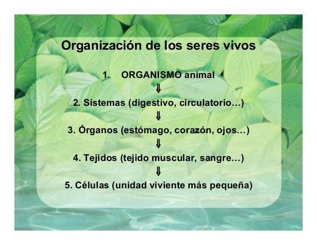 Clase de Anatomía y Fisiología Vegetal - generalidades sobre las plan…