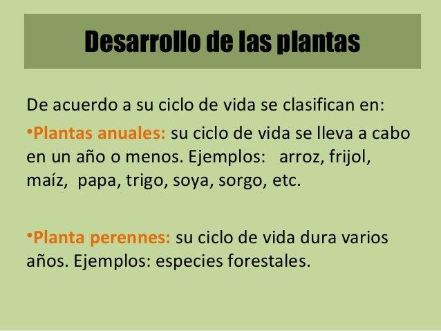 Factores de crecimiento de las plantas for Que son plantas ornamentales ejemplos