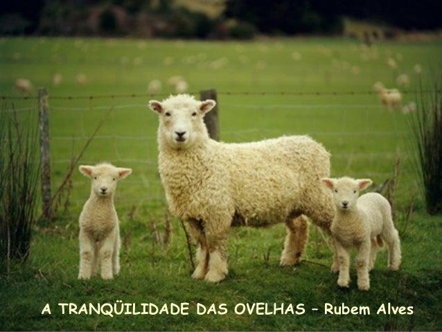 A TRANQÜILIDADE DAS OVELHAS – Rubem Alves
